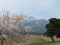 猪苗代町の桜