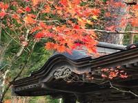 山本不動尊の紅葉