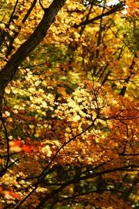★紅葉がまだ綺麗★