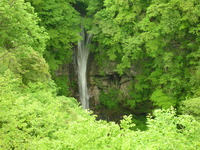 新緑の駒止めの滝