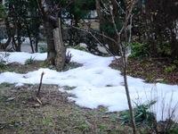 庭にまだ雪が・・・