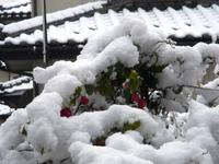 チロリアンランプが雪にも負けず