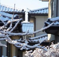 昨夜来の雪に陽があたって!