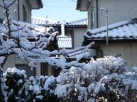 春彼岸 雪景色♪