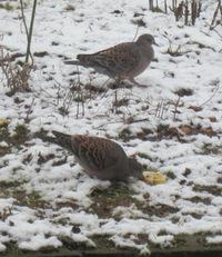 雪の中、野鳥が次々とやってきた!