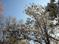 花見山公園へ~☆