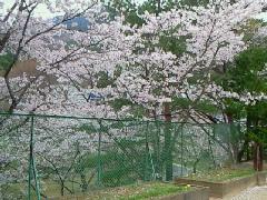 4月☆〜花見〜