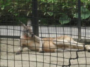 八木山動物園に行く