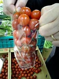 トマト詰め放題♪