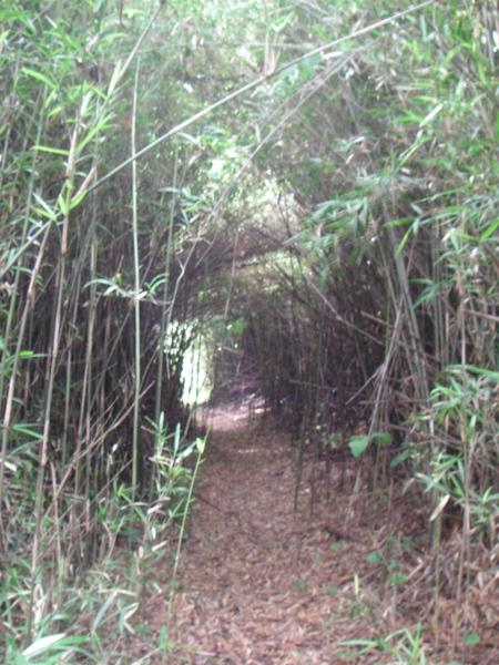 神秘的な小網代の森で癒されてくる