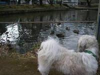 犬君と公園☆