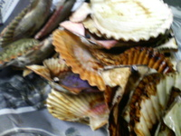 貝類は、後始末が大変です。