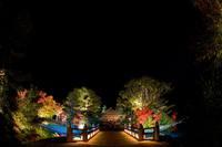 国宝 白水阿弥陀堂 紅葉ライトアップ2014 日程・時間など