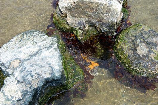 アクアマリン蛇の目ビーチ潮干狩り2014