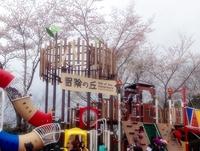 松ヶ岡公園の桜 新しい遊具も完成!/いわき桜2015