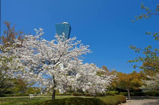 いわき桜の名所