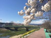 桜でお祝い! 勝手にいわきガイド開設1周年!