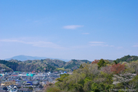 パステルな山肌〜桜から萌黄と新緑へ!