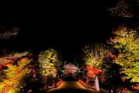 白水阿弥陀堂紅葉ライトアップ2014