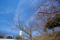 いわき桜2014