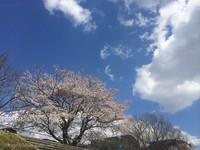 プレイバック いわきの春2014