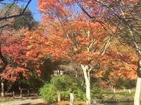 白水阿弥陀堂 紅葉のはじまり 《いわき観光動画》