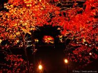 いよいよ明日が最終日!!国宝白水阿弥陀堂紅葉ライトアップ2015
