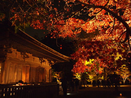 速報!白水阿弥陀堂 紅葉ライトアップ2014