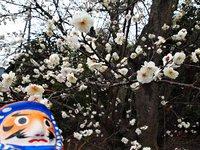 「お」さんぽ/白水阿弥陀堂に春近し