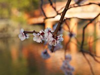 いわきに春がきた!!!