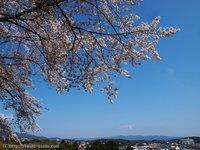 天空の杜に咲く桜@いわき翠の杜高校 いわき桜2015