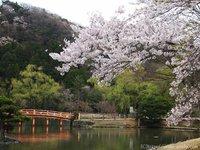 いよいよ4/25から!国宝白水阿弥陀堂・新緑ライトアップ! いわき桜2015
