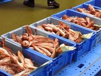 小名浜魚市場を訪問 #いわき市フジテレビ共同開催プレスツアー #料理人を繋ぐ