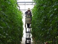 親バカトマトの助川農園を訪問 PCCツアー  #いわき市フジテレビ共同開催プレスツアー #料理人を繋ぐ