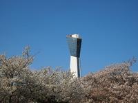 桜、マリンタワー/いわきの桜!2013
