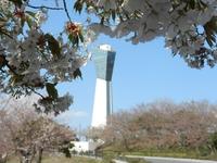 いわきマリンタワーと桜