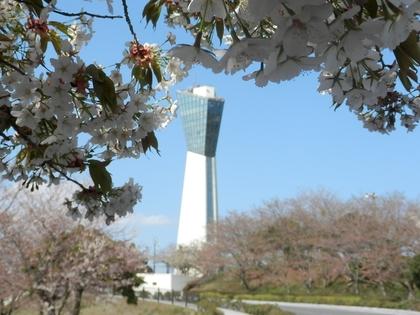 福島花見 サクラ いわきマリンタワー