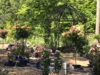 魔法の庭園