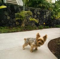 ハワイ島へ