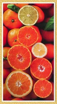 [柑橘系]。