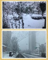 [雪やコンコン]。