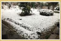[春の雪]。