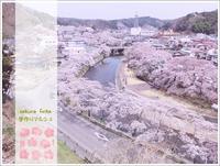 作家さん募集のお知らせ@石川町桜まつり