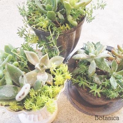 ◆ 多肉植物寄せ植えの会 ◆