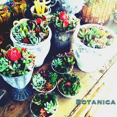 ◆ぷりぷり多肉植物寄せ植えの会◆