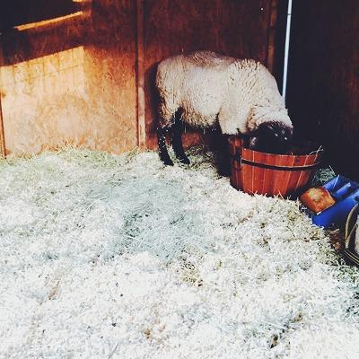 羊毛届きました♪