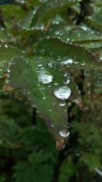 ☆7月梅雨ならではの☆