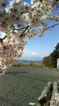 ☆桜の季節☆4月です。☆