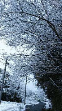 ☆12月9日初雪☆