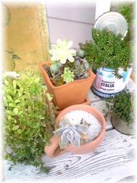 **my  garden**